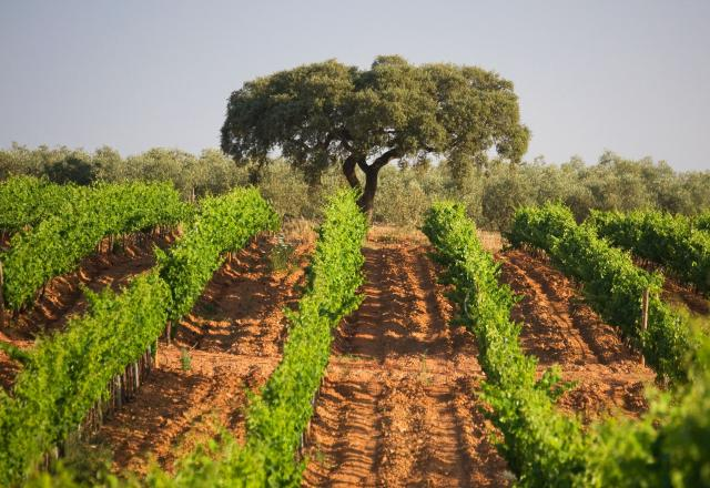 Herdade dos Grous vineard and farm experience